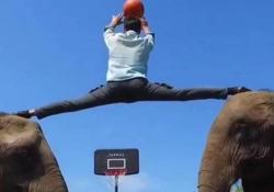 Basket, va a canestro sulla testa degli elefanti Segnare un canestro di spalle è già abbastanza complicato. Farlo sulla testa di due elefanti è davvero un'impresa incredibile - Dalla Rete