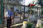 Canile abusivo a Sant'Onofrio, gli animali sporchi e malnutriti
