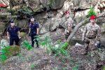 Tonnellate di droga nell'Aspromonte, nuovo blitz fra i monti: scoperte due piantagioni