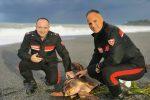 Scalea, tartaruga Caretta caretta impigliata in una rete: liberata dai carabinieri