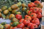 Dal Crea uno studio sulla biodiversità del pomodoro