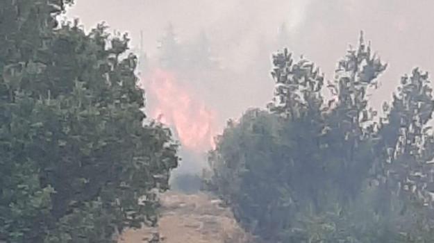 incendio, strongoli, Sergio Bruno, Catanzaro, Calabria, Cronaca