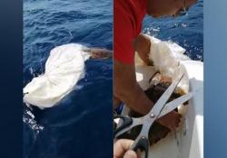 La tartaruga resta impigliata in un sacco di plastica: ecco come è stata salvata L'anmale è stato soccorso da due amici in barca. È successo ad Agrigento - Corriere Tv