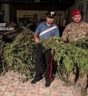 Gioia Tauro, essiccatoio di marijuana e droga per 900mila euro: due arresti