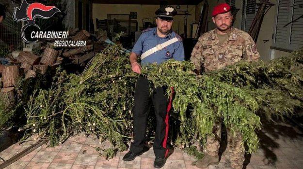 droga, marijuana, Reggio, Calabria, Cronaca