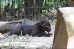 A Bergamo un cucciolo di pantera è ancora senza nome: al via un concorso online