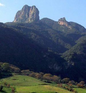 Il rovere più antico del mondo è nel Parco d'Aspromonte: ha quasi mille anni