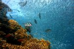 Almeno 11 specie di pesci potrebbero camminare sulla terraferma