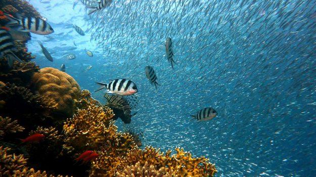 pesci, Scienza Tecnica
