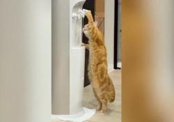 Questo gattino è davvero intelligente La breve clip del felino che beve dal distributore d'acqua è diventata virale - CorriereTV