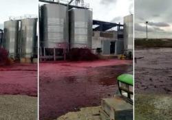Silos danneggiato: in Spagna fuoriescono oltre 50.000 litri di vino L'incidente, documentato con un video su Twitter, a Castilla-La Mancha - CorriereTV