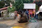 Messico, ratto sbuca dalle fogne dopo un temporale: operai scoprono la verità