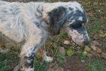 Francavilla Angitola, cane da caccia cade in un burrone: salvato dai vigili del fuoco