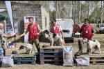 A Lamezia il Derby Cinofilo della Calabria, 72 i cani partecipanti