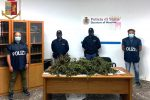 Messina, scoperta a coltivare marijuana in casa: arrestata una 31enne