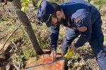 San Martino di Finita, denunciate tre persone per furto e taglio abusivo di piante