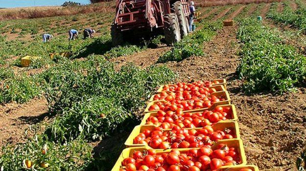 pomodoro siccagno, valledolmo, Sicilia, Economia