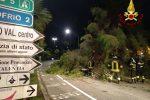 Vibo Valentia, albero crolla sulla strada in viale della Pace