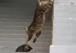 Dolcissimo: i gatti aiutano il micino a saltare sopra il muretto Il filmato del gattino in difficoltà è stato girato a Napoli qualche mese fa - CorriereTV