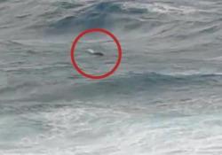 Foca monaca avvistata al largo dell'isola di Pianosa: è uno dei 700 esemplari rimasti in natura L'avvistamento nel mare grosso: le immagini catturate il 2 ottobre - Corriere Tv