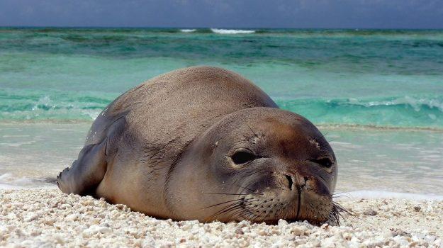foca monaca, lampedusa, Totò Martello, Sicilia, Società