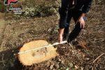 Umbriatico, tre persone denunciate per l'abbattimento di 10 grandi querce