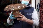 Cetraro, ritrovato nei boschi un fungo porcino di 2,3 chili