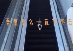 Il micino «confuso» scende le scale mobili al contrario La sua discesa diventa davvero lunghissima. E la clip è cliccatissima - CorriereTV