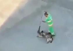 Lo spazzino e la «carezza» con la scopa al cane randagio: il video diventa virale Il video di uno spazzino che accarezza con la scopa un cane randagio è diventato virale sui social network - CorriereTV