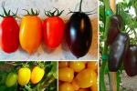 Per il San Marzano nuovi colori, sapori e proprietà nutritive