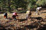"""Coldiretti Calabria, arrivano le prime castagne: raccolto e qualità in aumento dopo gli """"anni bui"""""""