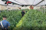 Piantagioni di marijuana nelle serre dei fiori, otto arresti aSellia Marina