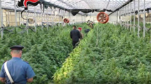 droga, marijuana, sella marina, Catanzaro, Calabria, Cronaca