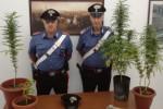 Catanzaro, pregiudicato 47enne arrestato per spaccio di marijuana