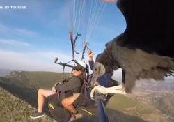 """Spagna, si lancia con il parapendio: insieme all'istruttore c'è un avvoltoio Il video dell'istruttore di """"parahawking"""" Scott Mason - Ansa"""