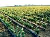 Vino, 13,5 mln per promozione sui mercati internazionali in Toscana