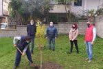 """""""Giornata nazionale degli Alberi"""", a Maierato piantato un melograno nel cortile delle elementari"""