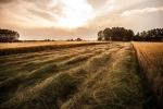 Agea, Centri Assistenza Agricola hanno firmato la convenzione 2020-2021
