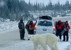Canada, orso polare attraversa la strada vicino a un gruppo di persone: il video Il video ripreso a inizio novembre a Churchill, in Canada - Dalla Rete
