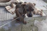 Messina, lega un cane ad un palo e lo abbandona: rintracciato e denunciato il responsabile