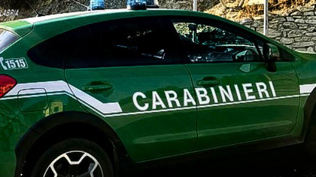 bracconaggio, caccia, Reggio, Calabria, Cronaca