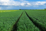 """Convenzione CAA, Agea """"Massima protezione sistema economico agricolo"""""""