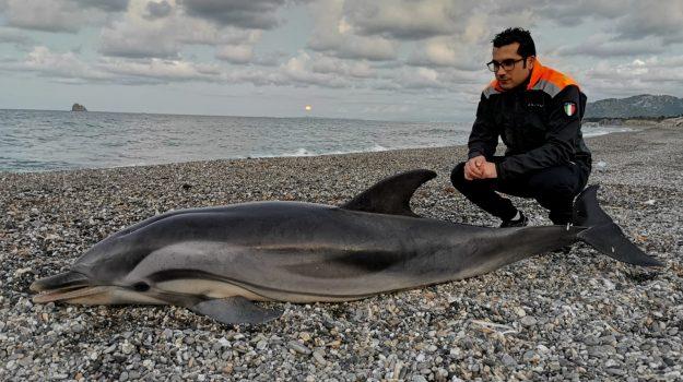 delfino, mare, patti marina, Messina, Sicilia, Cronaca