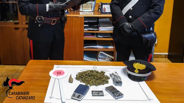 arresti, droga, marijuana, Catanzaro, Calabria, Cronaca