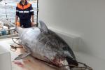 Europa-Regioni: ok Ue a piano gestione tonno rosso