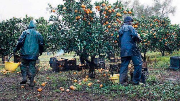 corigliano-rossano, lavoratori extracomunitari, Cosenza, Calabria, Cronaca