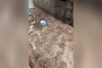 Maltempo in Sardegna, nubifragi e fiumi di fango: tre vittime e due dispersi - Video