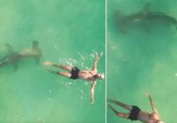 Miami: un grosso squalo nuota sotto l'uomo ignaro del pericolo Il filmato catturato dal drone al largo di Miami, in Florida - CorriereTV