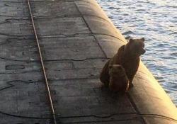 Russia, mamma orsa e il suo cucciolo uccisi dopo essere saliti a bordo di un sottomarino ormeggiato al porto La tragica fine dei due animali in Kamchatka - Ansa