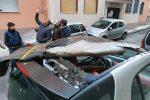 Maltempo a Messina, si stacca la guaina di un tetto e sfonda una smart